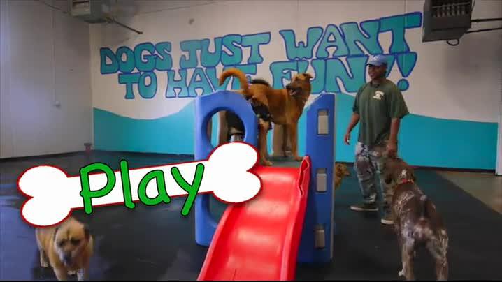 Colorado springs dog boarding daycare grooming training solutioingenieria Gallery