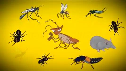 Pest Control Service in Houma, LA | Terminix Pest Control